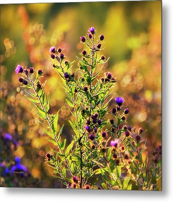 Metal Print featuring the photograph Sunset Flowers by Christina Rollo