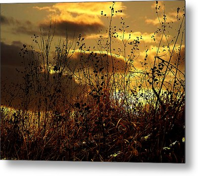 Sunset Grasses Metal Print by Julie Hamilton