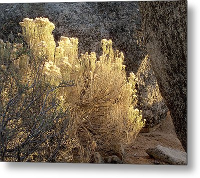 Sunset In The Rabbitbrush Lake Tahoe Sierra Nevada Larry Darnell Metal Print by Larry Darnell