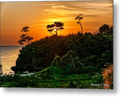 Sunset In The Tree Metal Print by Christopher Holmes