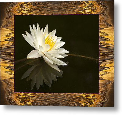 Sunset Lily Metal Print by Bell And Todd
