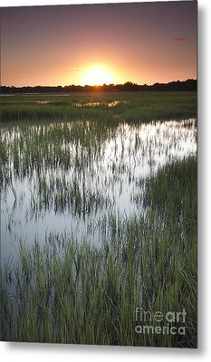 Sunset Marsh Grass Metal Print