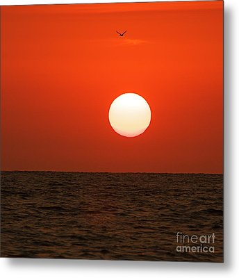 Metal Print featuring the photograph Sunset by Nicola Fiscarelli