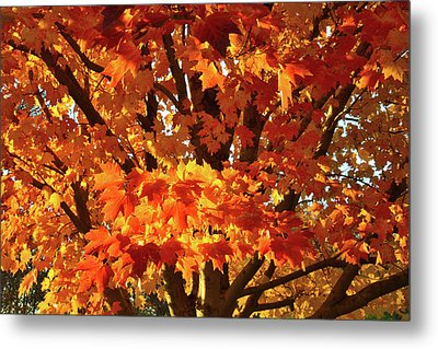 Metal Print featuring the photograph Sunset On Sugar Maple by Ray Mathis