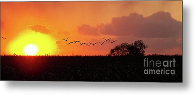 Sunset Over Easy Metal Print by Sue Stefanowicz