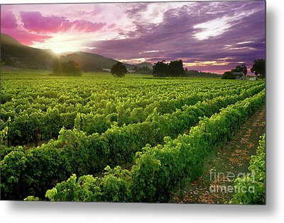 Sunset Over The Vineyard Metal Print by Jon Neidert
