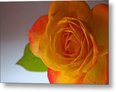 Sunset Rose Metal Print
