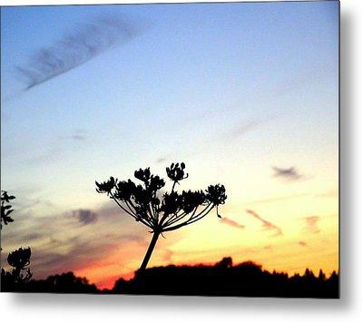 Sunset Seedhead Silhouette  Metal Print