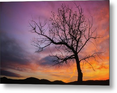 Sunset Tree Metal Print by Darren White