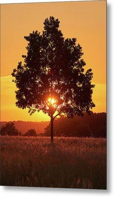 Sunset Tree Metal Print by Marc Huebner