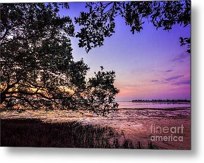 Sunset Under The Mangroves Metal Print