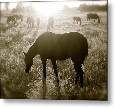 Sunset With Band Of Horses Metal Print