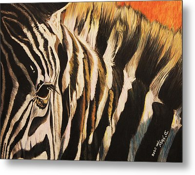 Sunset Zebra Metal Print by Don MacCarthy