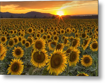 Sunshine And Happiness Metal Print by Mark Kiver