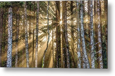 Metal Print featuring the photograph Sunshine Forest by Pierre Leclerc Photography