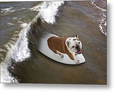 Metal Print featuring the photograph Surfer Dog by John A Rodriguez