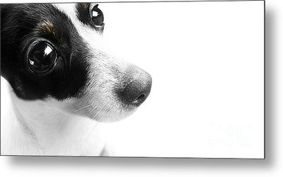 Surprised Dog Face Metal Print
