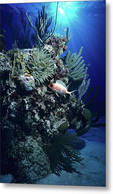 Surreal Reef Collage Metal Print by Don Kreuter