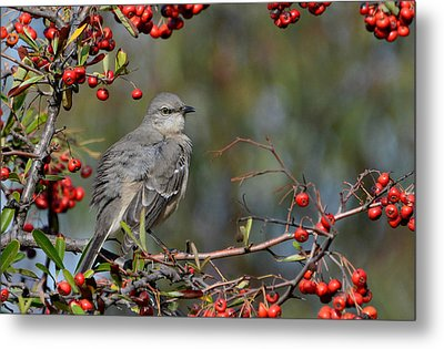Surrounded By Berries Metal Print by Fraida Gutovich