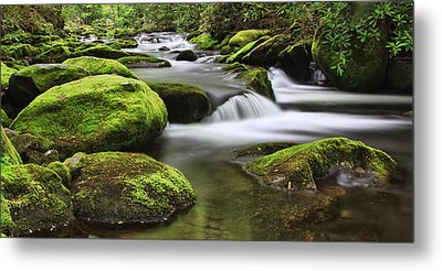 Surrounded In Green Metal Print