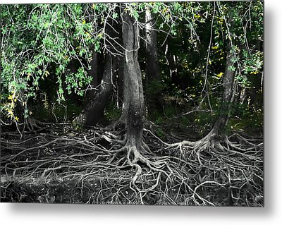 Survival Of The Fittest Metal Print by Debra Forand