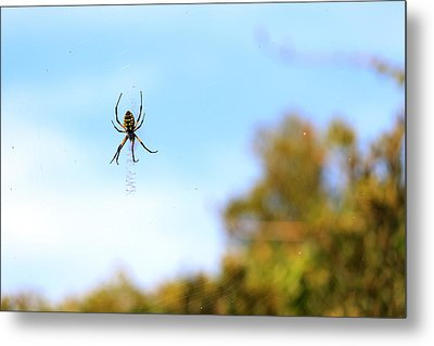 Suspended Spider Metal Print