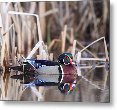 Suspicious Metal Print by Gerry Sibell