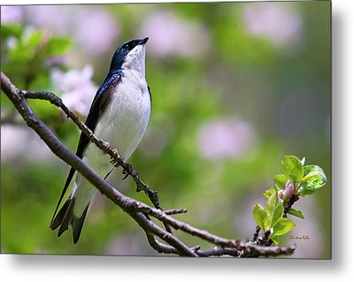 Swallow Song Metal Print by Christina Rollo