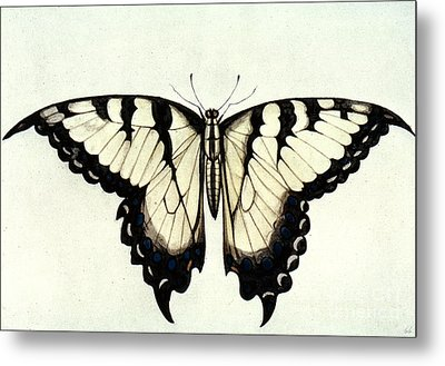 Swallow-tail Butterfly Metal Print by Granger