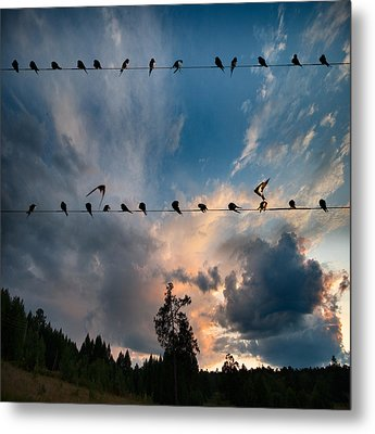 Metal Print featuring the photograph Swallows by Vladimir Kholostykh