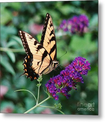 Swallowtail Butterfly 1 Metal Print by Sue Melvin