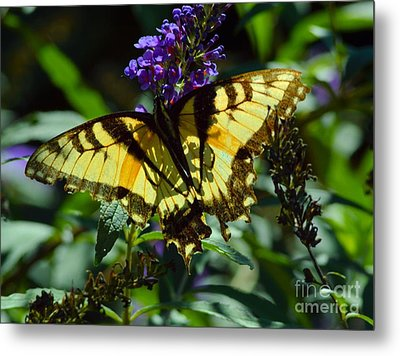 Swallowtail Butterfly #2 Metal Print