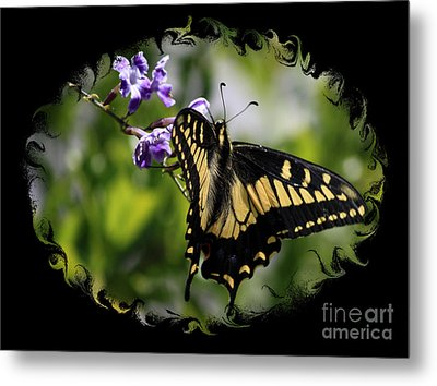 Swallowtail Butterfly 2 With Swirly Framing Metal Print