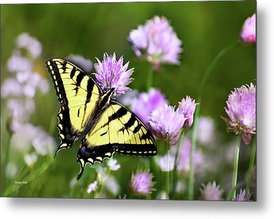 Swallowtail Butterfly Dream Metal Print by Christina Rollo