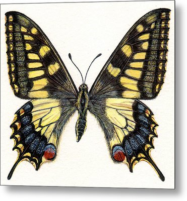 Swallowtail Butterfly Metal Print by Rachel Pedder-Smith