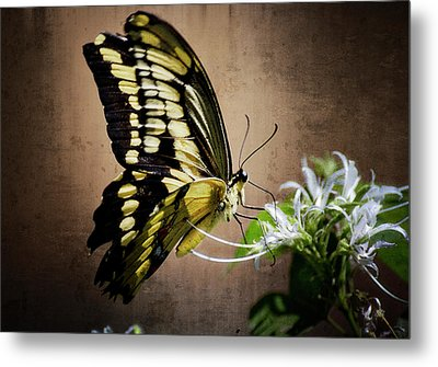 Swallowtail Metal Print by Saija  Lehtonen