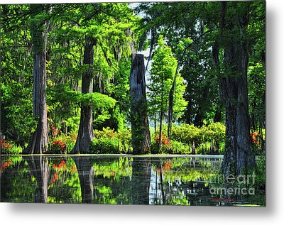Swamp In Bloom Signed Metal Print