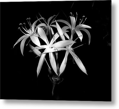 Metal Print featuring the photograph Swamp Lilies by Peg Urban