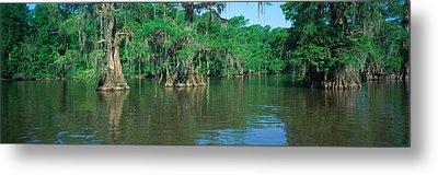 Swamp, Louisiana Metal Print by Panoramic Images