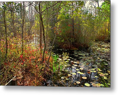 Swamps In Sc Metal Print by Susanne Van Hulst