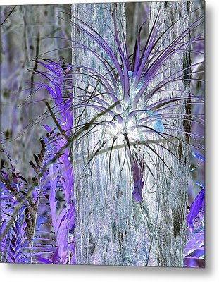 Glowing Air Plant Metal Print