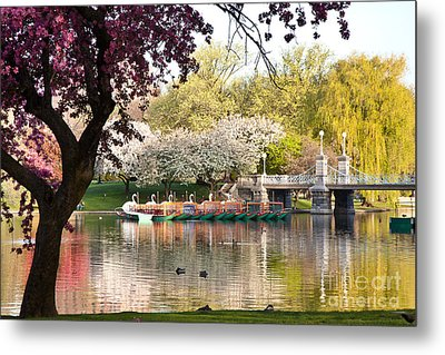 Swan Boats With Apple Blossoms Metal Print