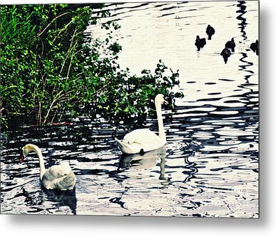 Metal Print featuring the photograph Swan Family On The Rhine 2 by Sarah Loft