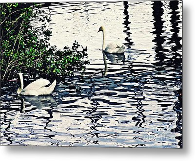Metal Print featuring the photograph Swan Family On The Rhine 3 by Sarah Loft