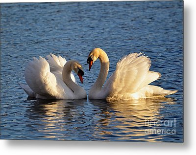 Swan Heart Metal Print by Mats Silvan