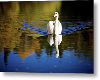 Swan In Color Metal Print