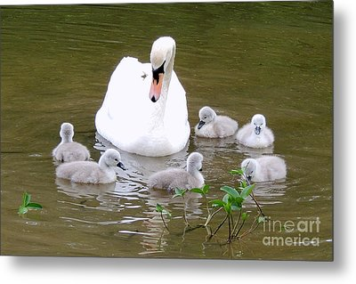 Metal Print featuring the photograph Swan Lake 1 by Bill Holkham