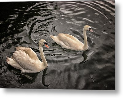 Swan Lake Metal Print by Martin Newman