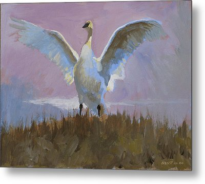 Swan Metal Print by Robert Bissett
