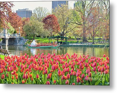 Swans And Tulips 2 Metal Print by Susan Cole Kelly